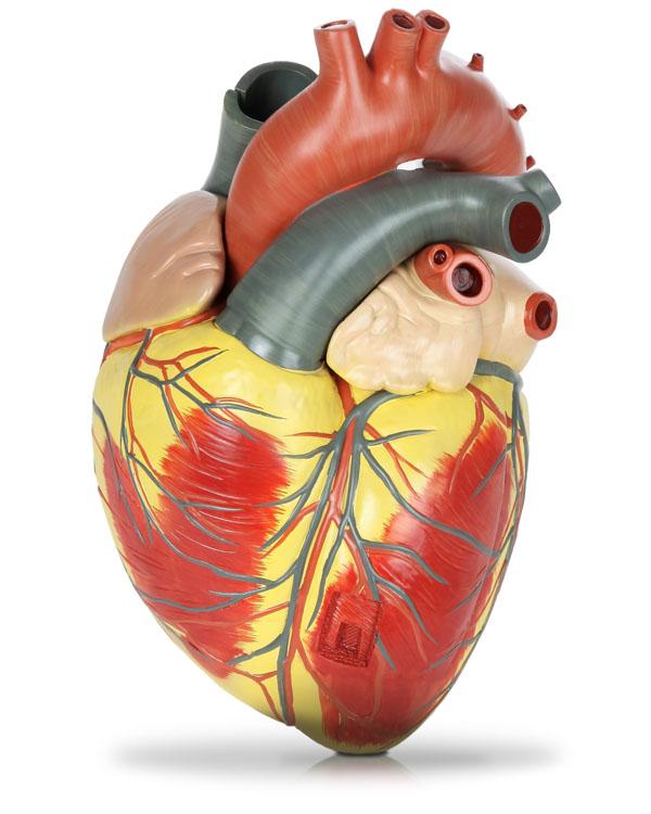 Ecografie cardiaca Brasov